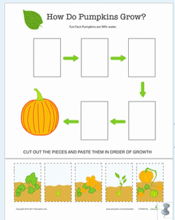 Process - Life Cycle of a Pumpkin